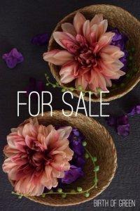 For Sale Dahlia Arrangement(2sets)