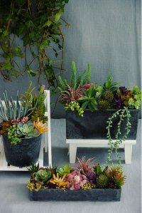 Succulent Arrangement (3set)
