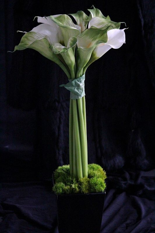 画像1: Calla Topiary